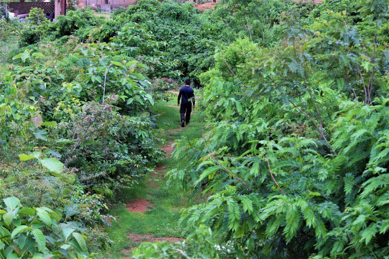 hranjive šume
