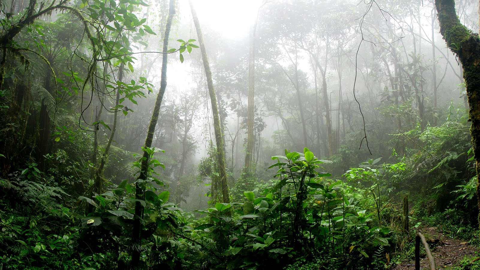 Kostarika je udvostručila svoj šumski pokrov u posljednjih 30 godina