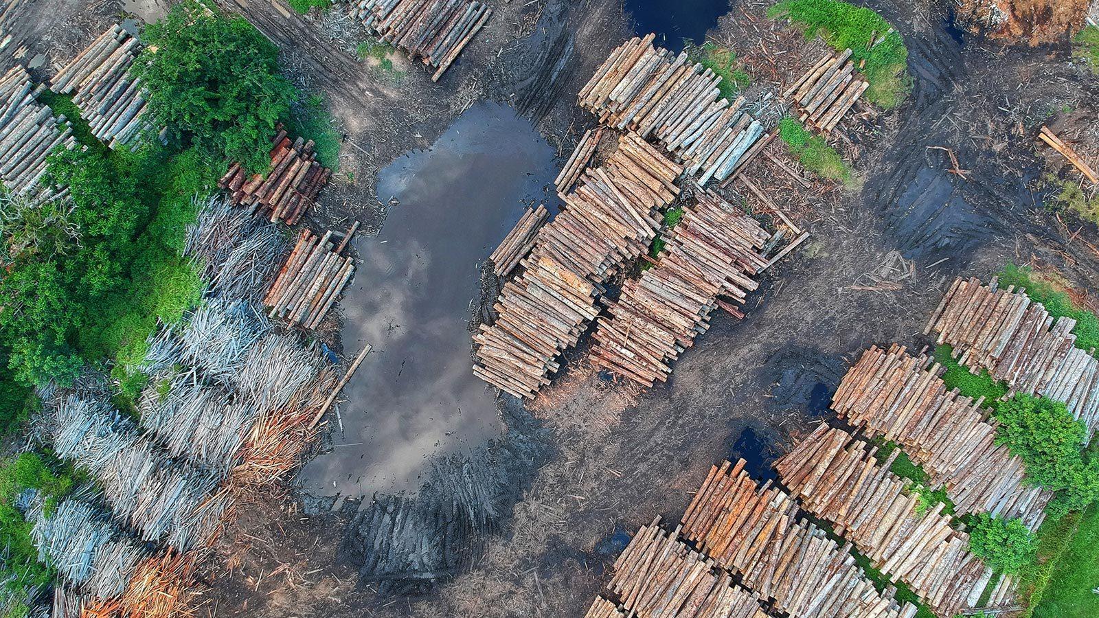 Masovno krčenje šuma: globalna trgovina i deforestacija u Brazilu i Indoneziji