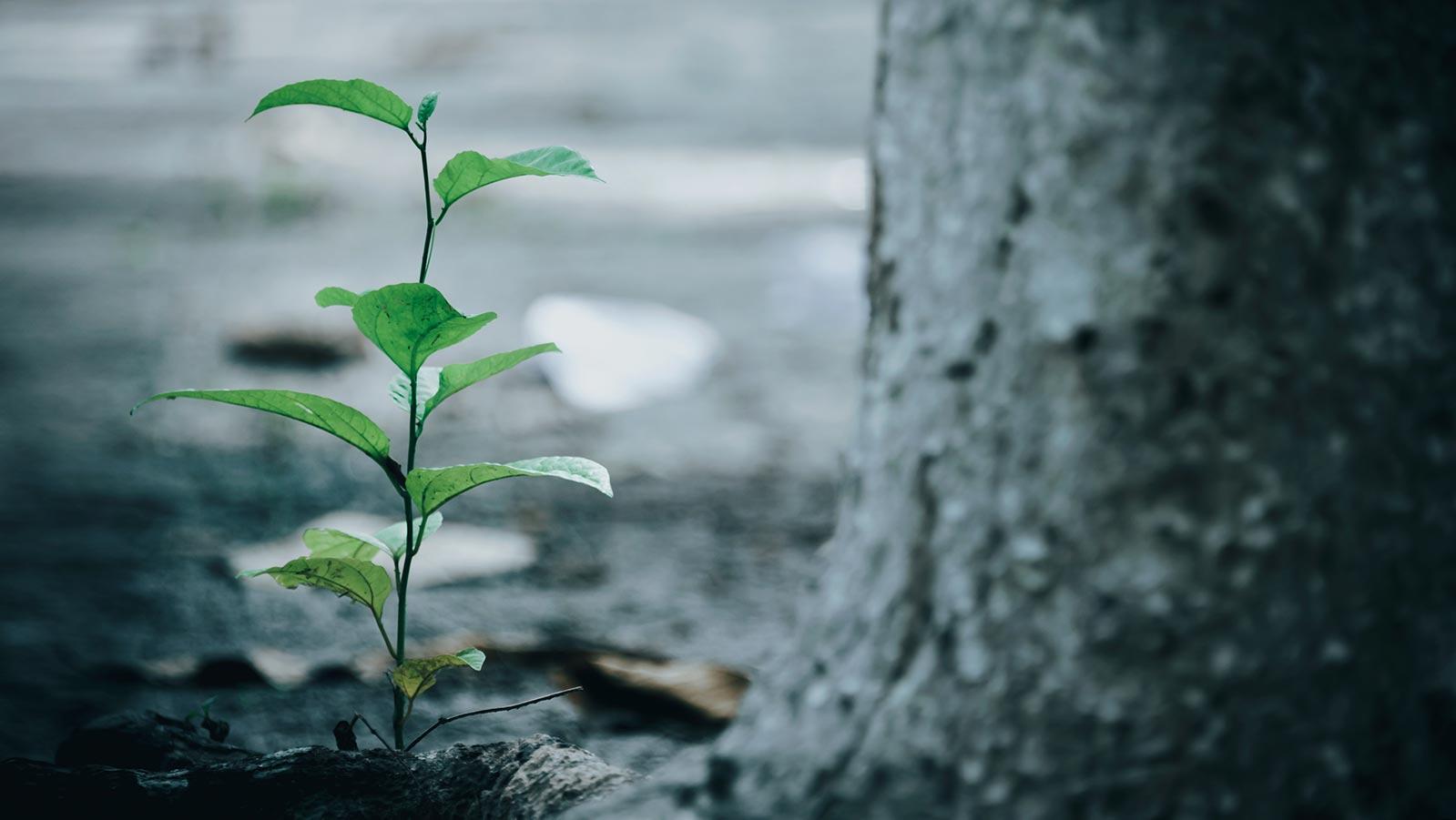 Uzgoj 100 godišnjih šuma u samo 10 godina