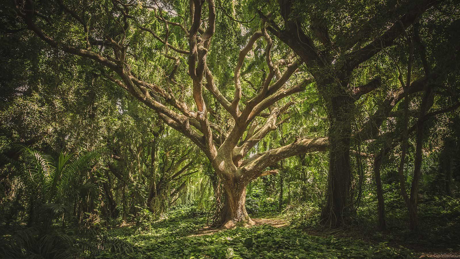 Pjesme drveća: biologova lirska oda o odnosima koji tkaju tkanje života