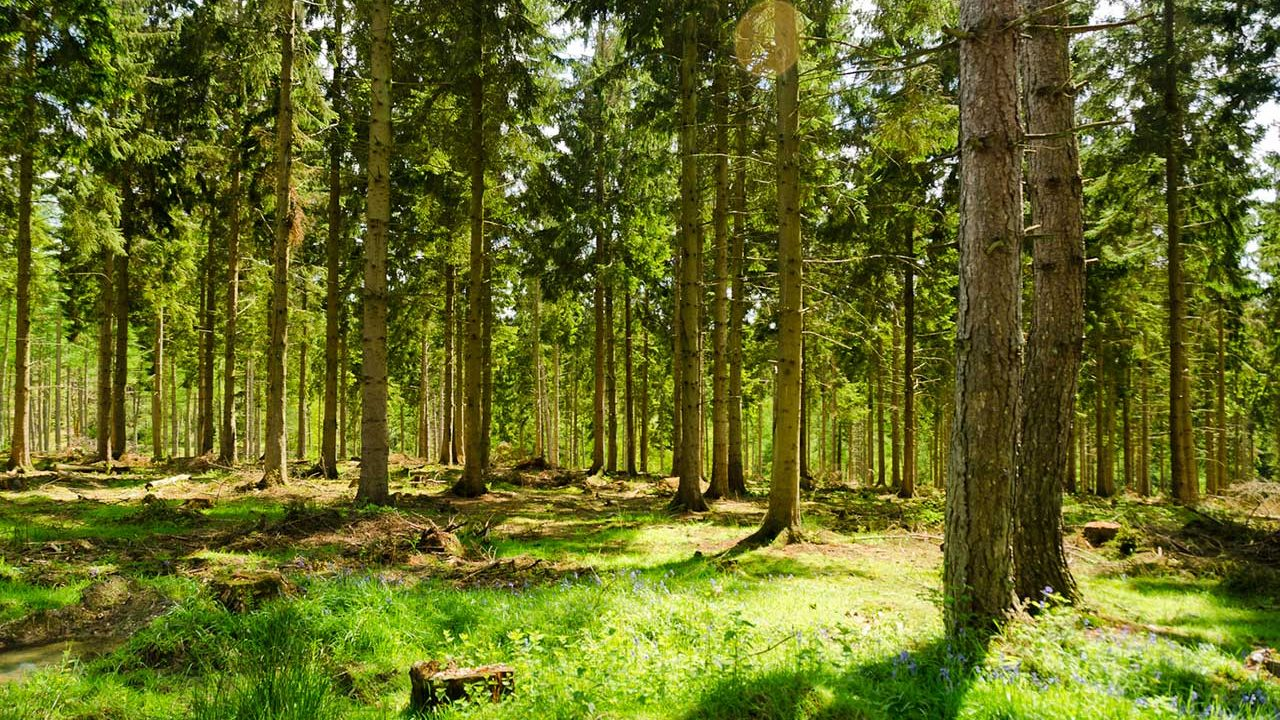 130.000 stabala biti će posađeno diljem Engleske u borbi protiv klimatskih promjena