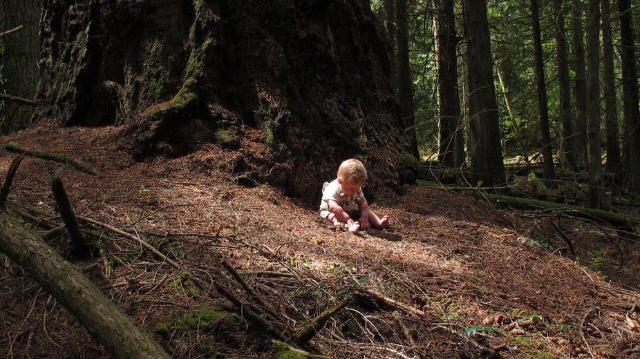 Što starije stablo – veća apsorpcija ugljičnog dioksida