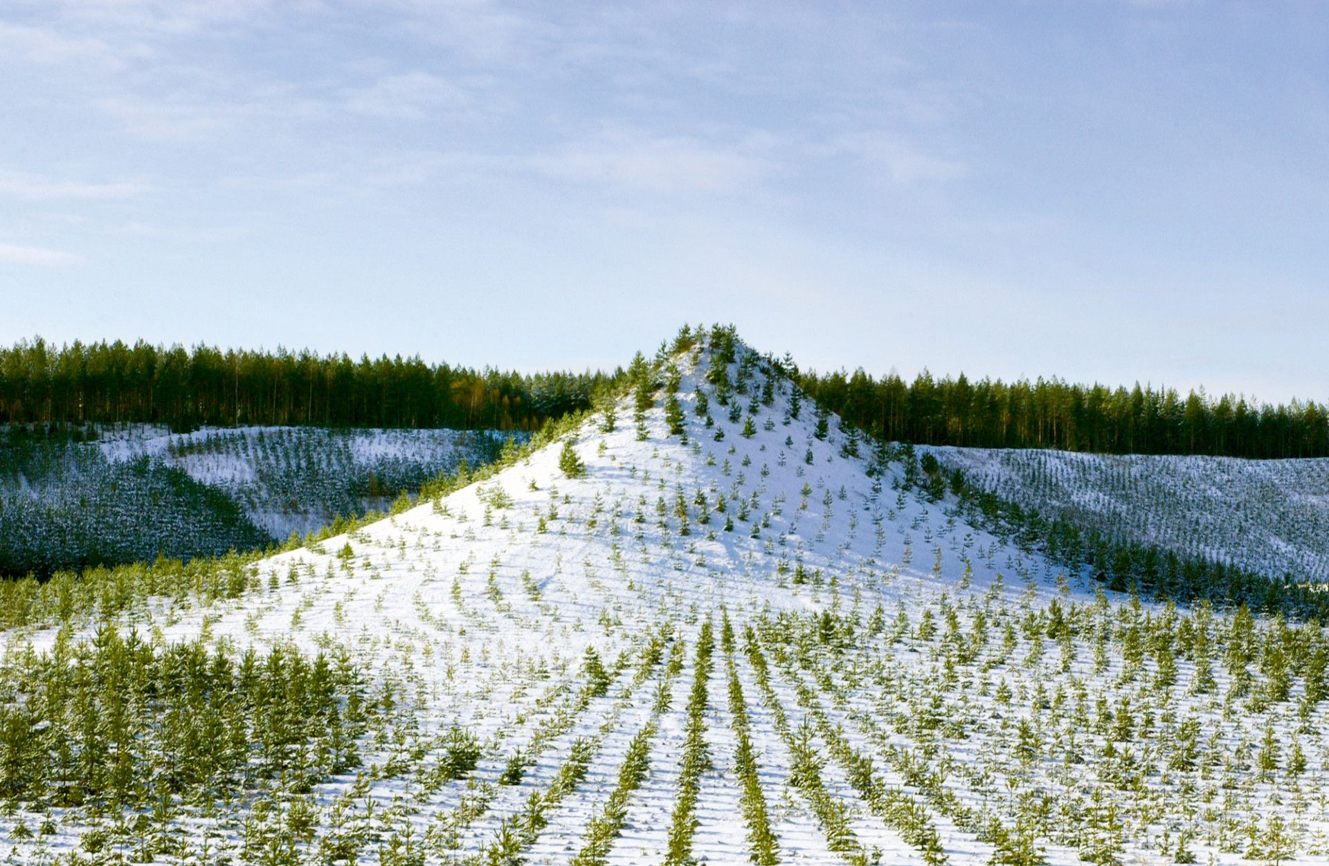 Dar za budućnost – land art Agnes Denes