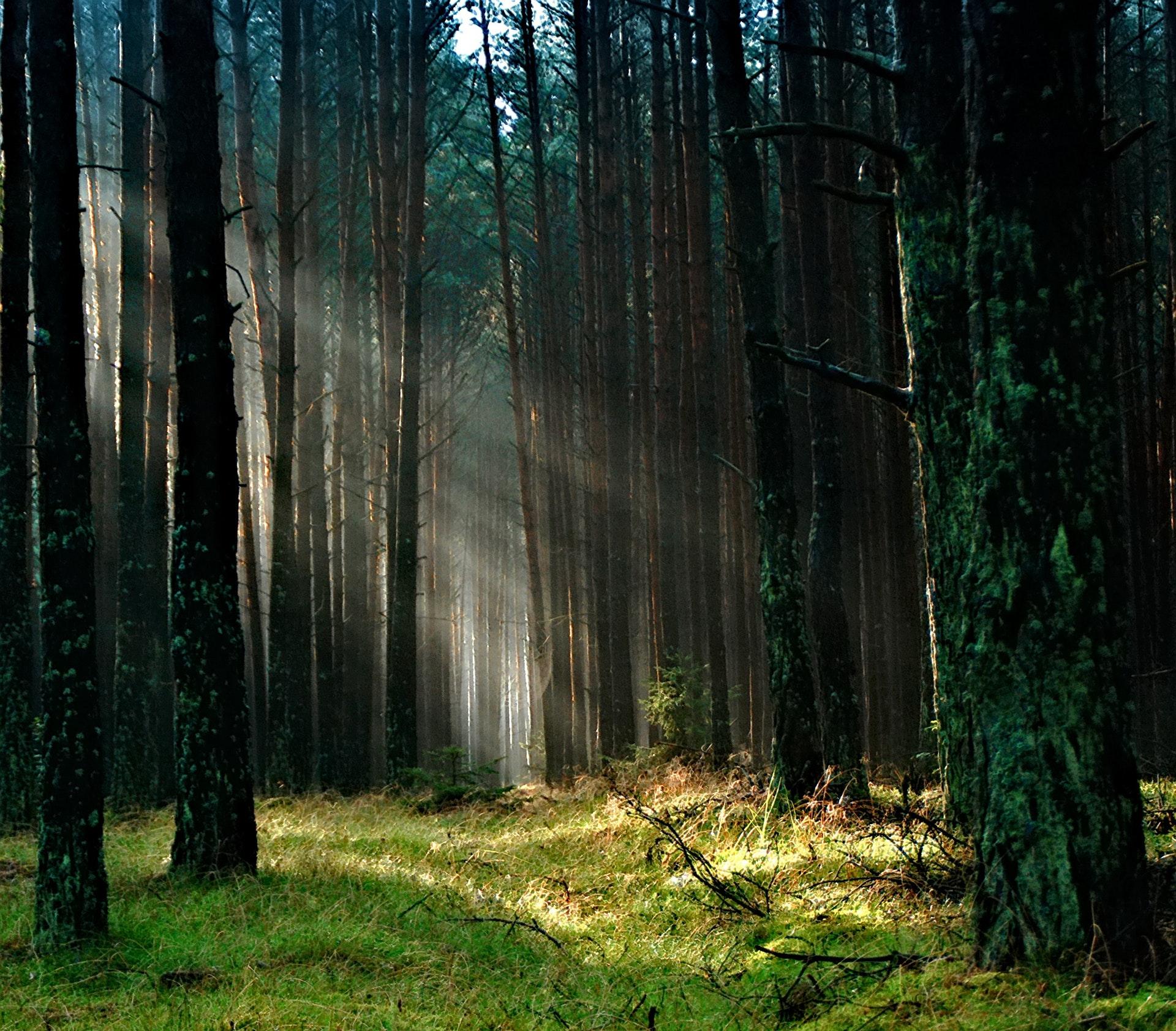 Europska autohtona stabla – izumiru