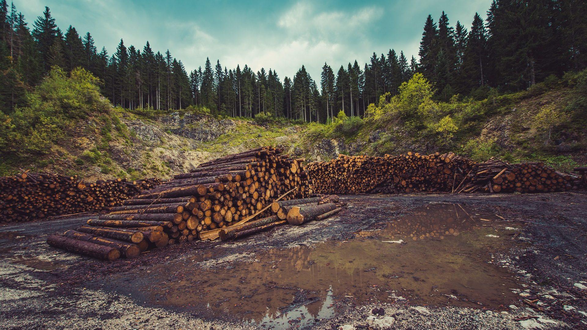 Deforestacija u Poljskoj – primjer rata protiv prirode
